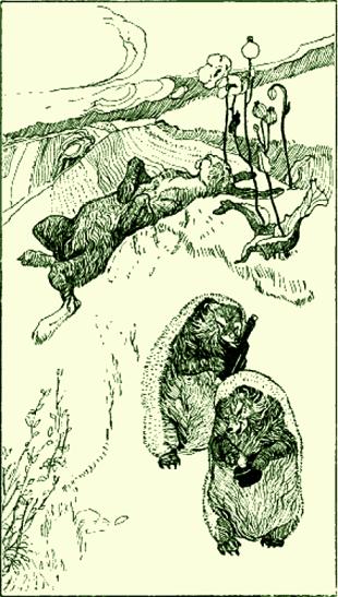 Hase und Igel