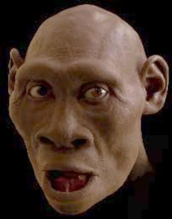 Dmanisi-Mensch; Rekonstruktion von National Geographic
