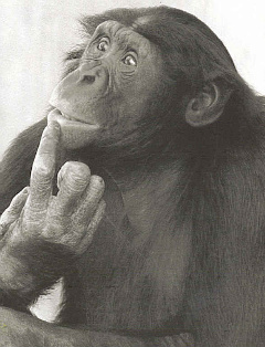 chimp_thinking